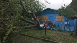 Family of 5 stays put during Hurricane Matthew after giant tree crashes into power lines