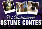 News 13's Pet Halloween Costume Contest