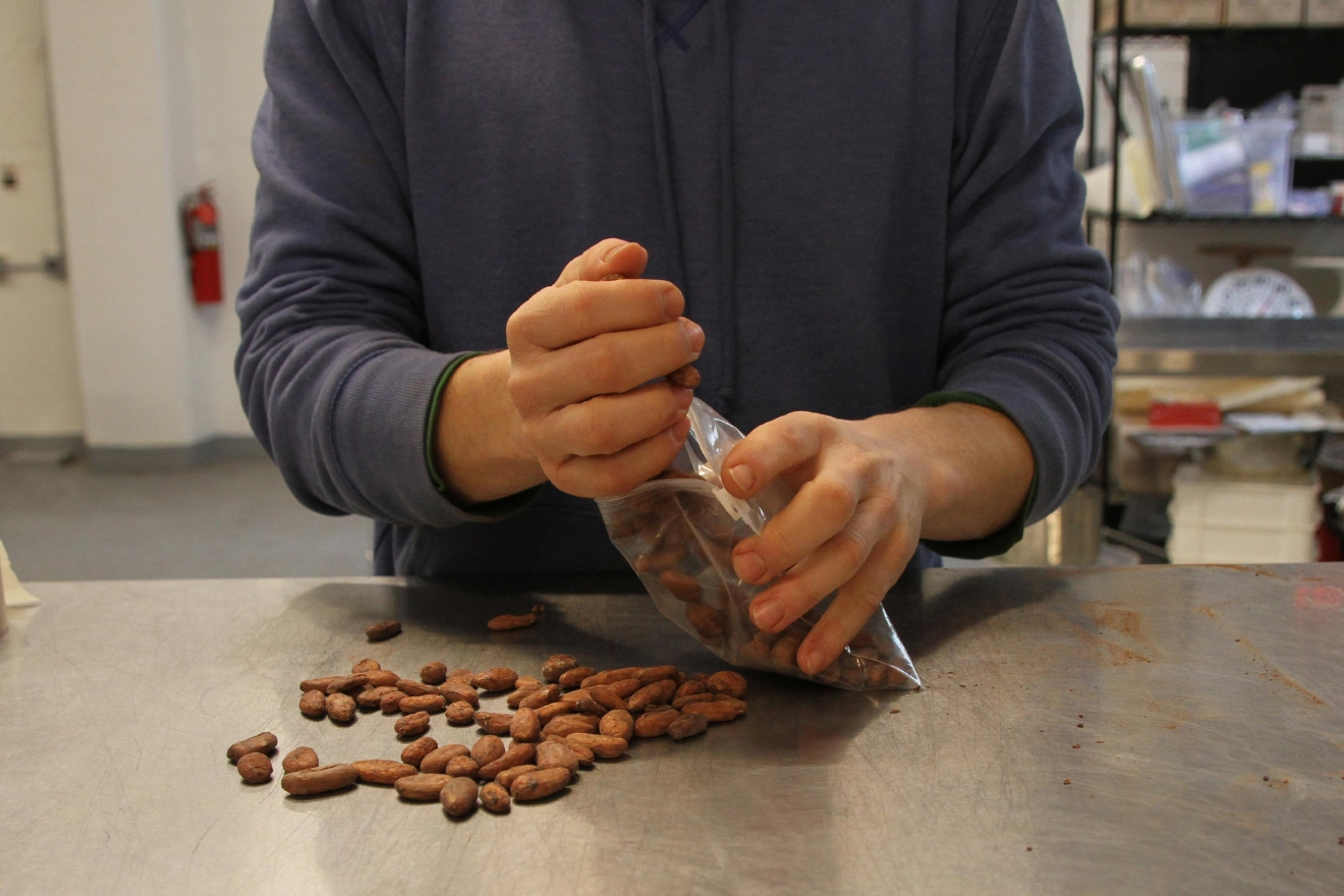 Adam says Undone Chocolate specifically tries to make chocolate that's still good for consumers and rich and antioxidants, which is why the cacao is so important. (Image: Amanda Andrade-Rhoades/ DC Refined)
