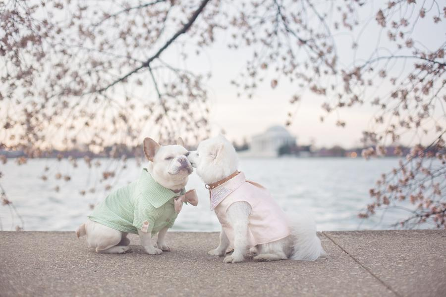 "According to owner Emily Abril, Sebastian and Luna take photos with the blossoms annually, and it's their favorite shoot of the year. ""As a former portrait photographer, I took many engagement portraits here at sunrise,"" says Emily. (Image: Emily Abril)"