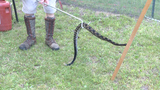 Dangerous snakes attract big crowds at round-up