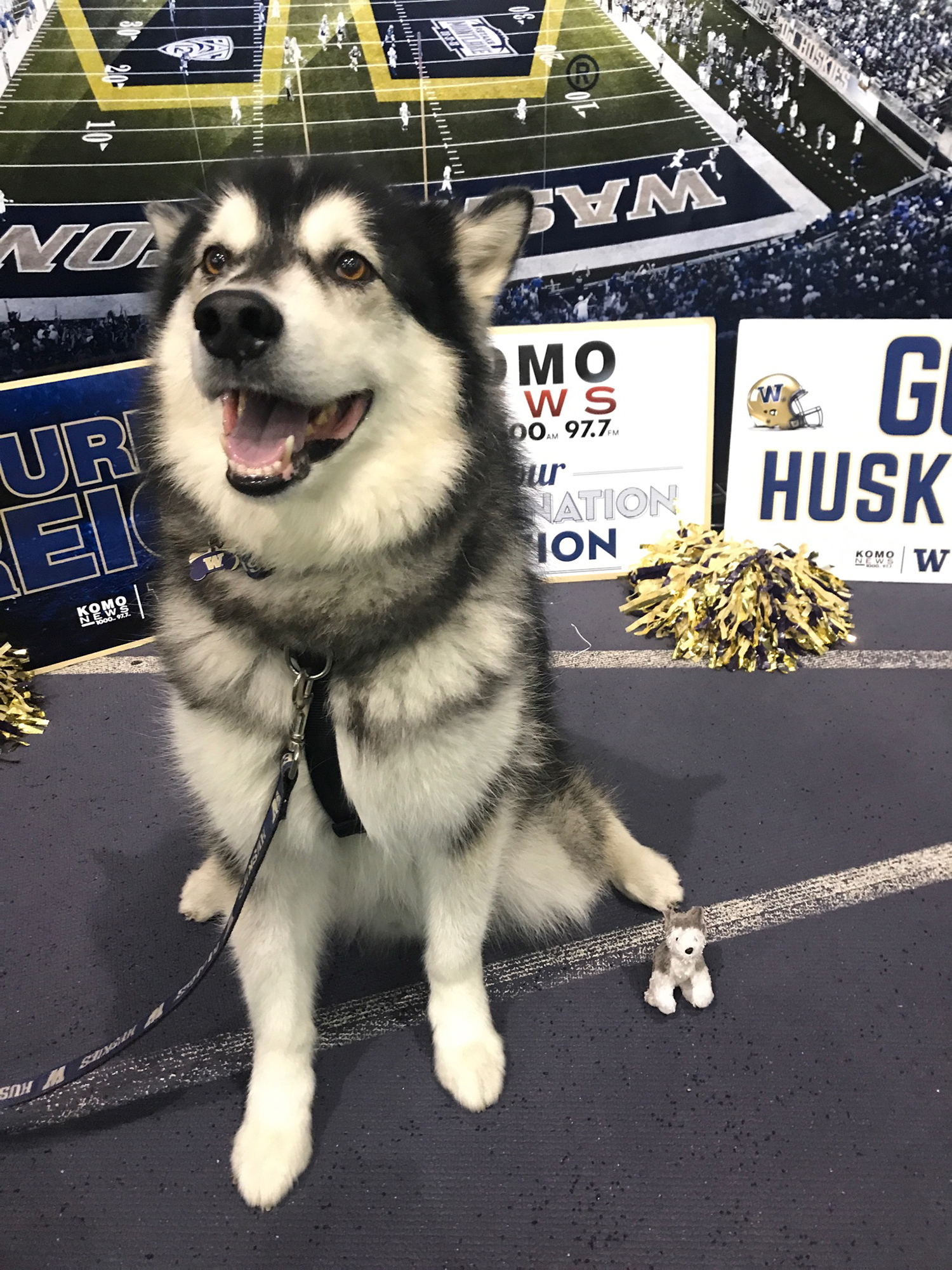 We are so saddened to learn of the passing of Dubs I, the retired goodest mascot of the University of Washington. You gave so many fans, reporters, players and families so much love - we miss you, but we just know you're in DaWg heaven. (Image: Hailey Helber / KOMO Newsradio)