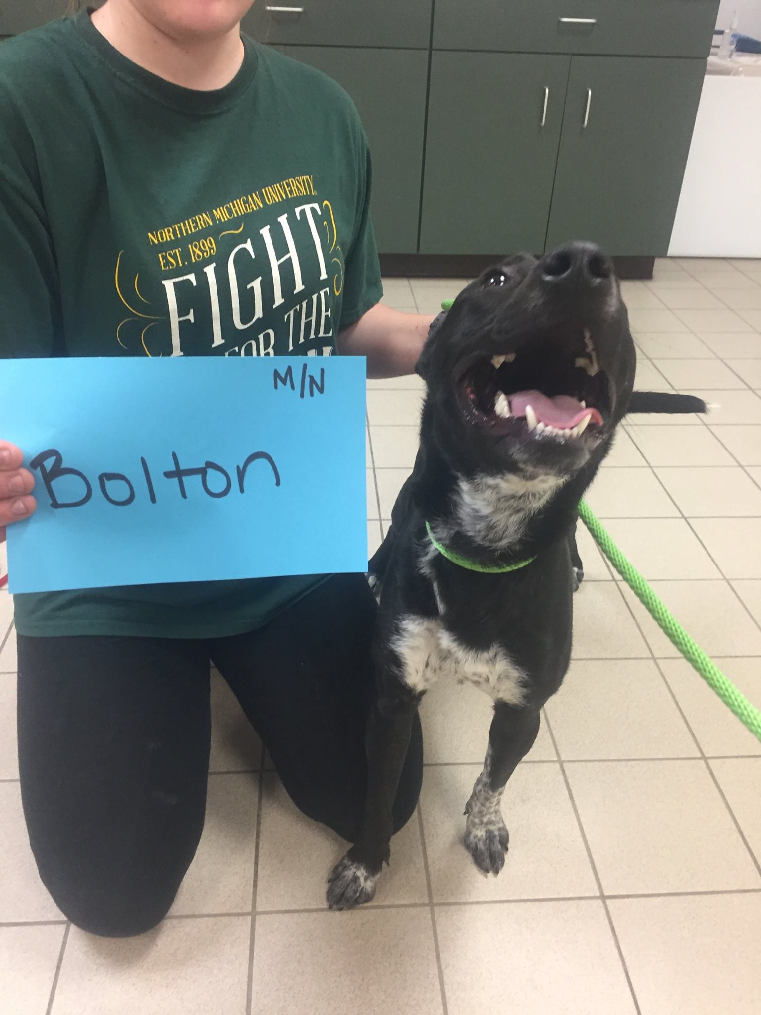 Bolton is available to meet you at the Cherryland Humane Society.