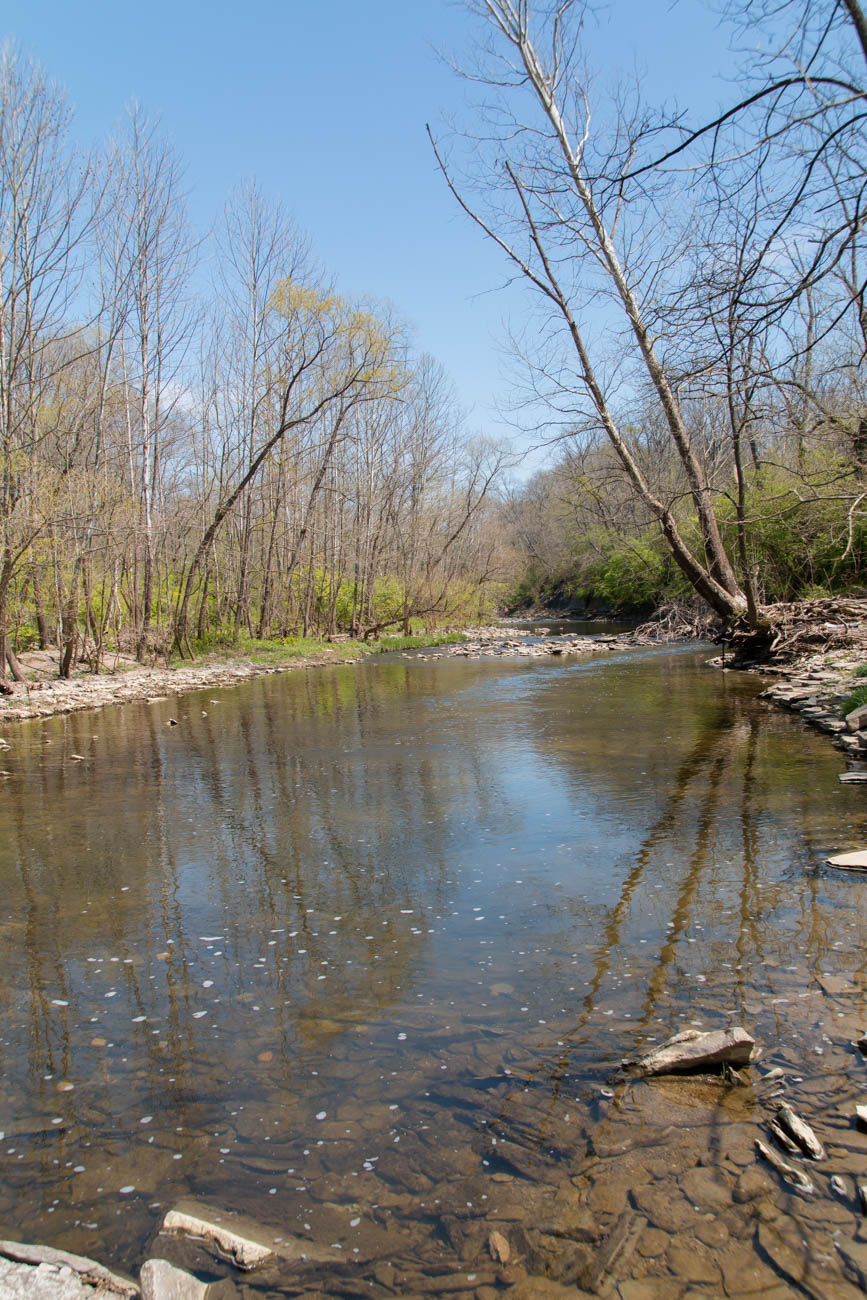 Founded in 1998, the Loveland Nature Preserve occupies 21 acres of land and is quite popular among the birding community. The park is free of charge and is kept well-maintained by volunteers. It's located off East Loveland Avenue with parking available in the lot shared by the Loveland Moose Lodge and the fire department. Take the short bridge across the creek to enter the preserve. / Image: Elizabeth A. Lowry // Published: 5.12.20