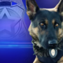 Person bitten by K-9 during burglary investigation