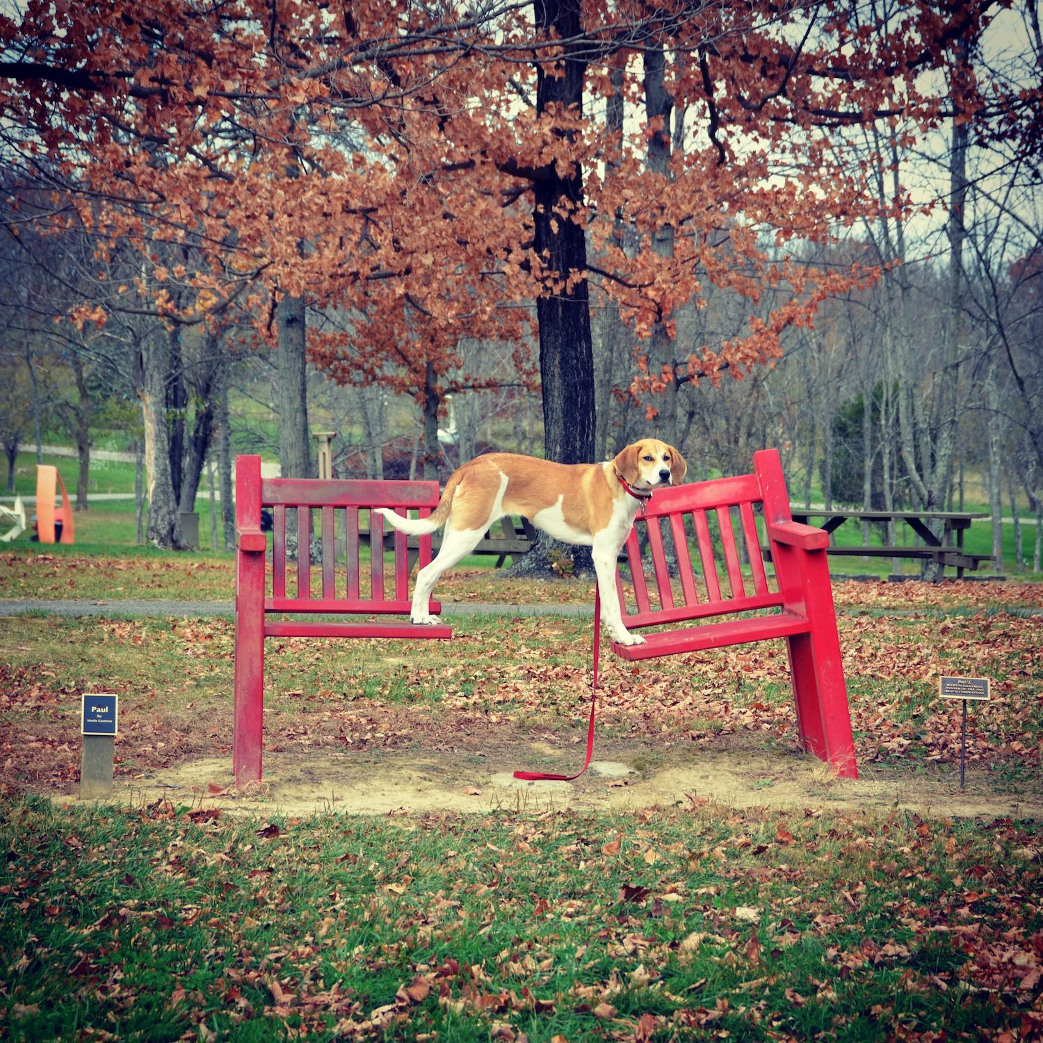LOCATION: Pyramid Hill / Mollie is a local Instagram celebrity. Famous for posing on fire hydrants in front of ArtWorks murals (and other Cincy landmarks), this hound dog has officially stolen our hearts. You can follow her adventures on Instagram @molliethehounddoggie / Image: Patti Mossey (Mollie's owner and #1 fan) // Published: 5.1.18
