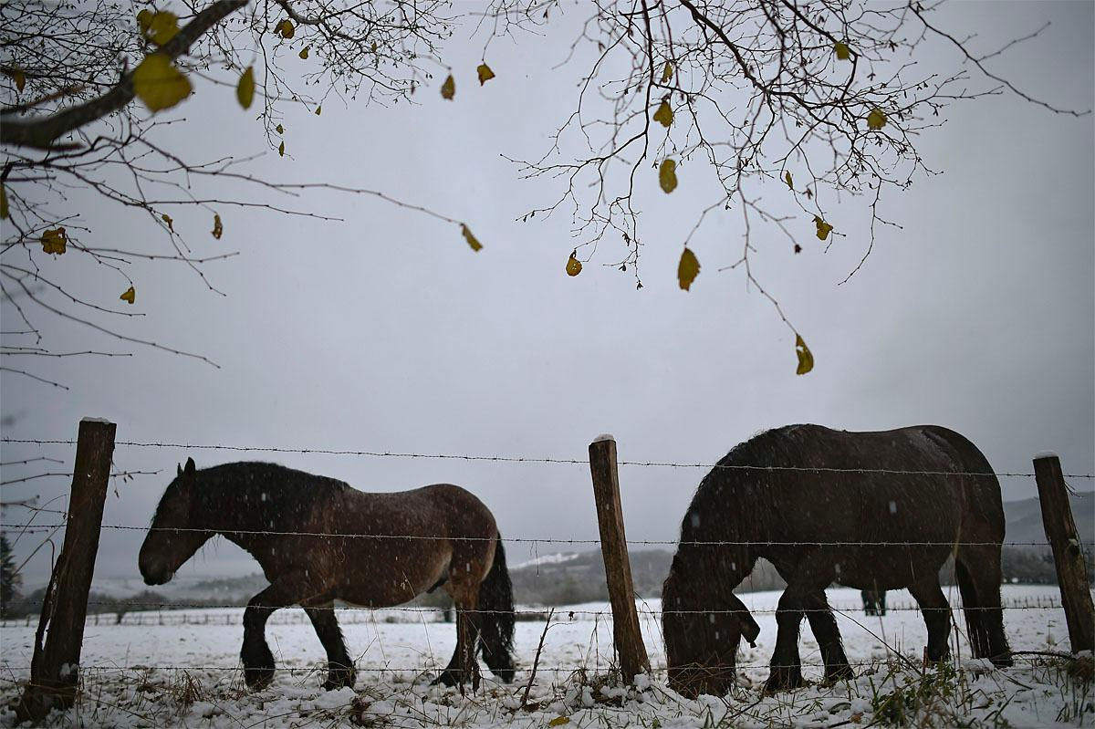 Two horses stand in the landscape covered with the first snow, in Burguete, northern Spain, Wednesday, Nov. 23, 2016. After a mild autumn the temperatures has fallen in the north of the country with snow and cold wind. (AP Photo/Alvaro Barrientos)