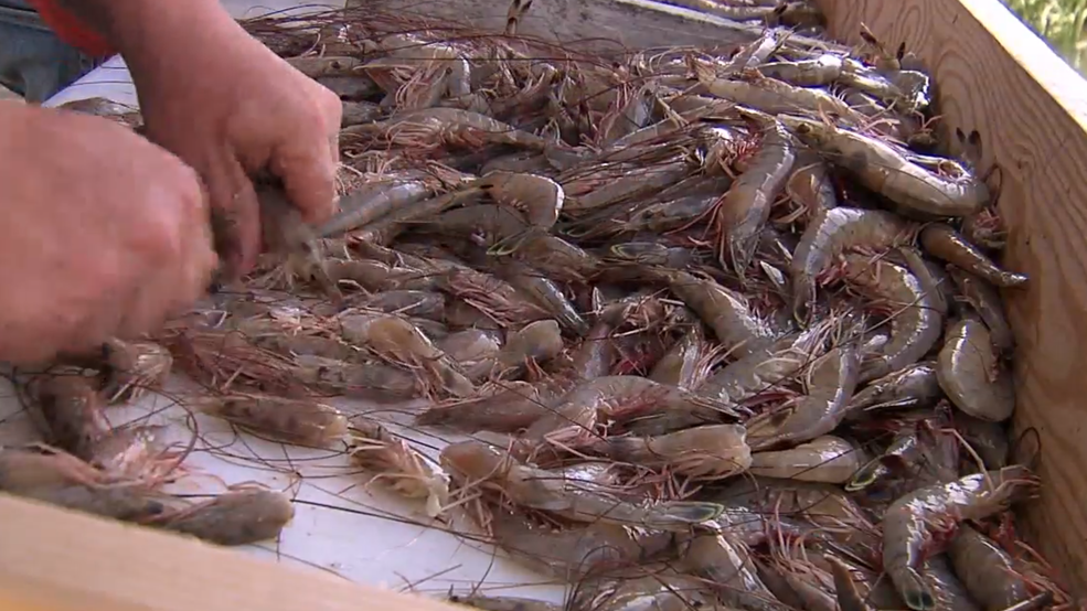 Lowcountry shrimp numbers back up as season opens for business, per SCDNR
