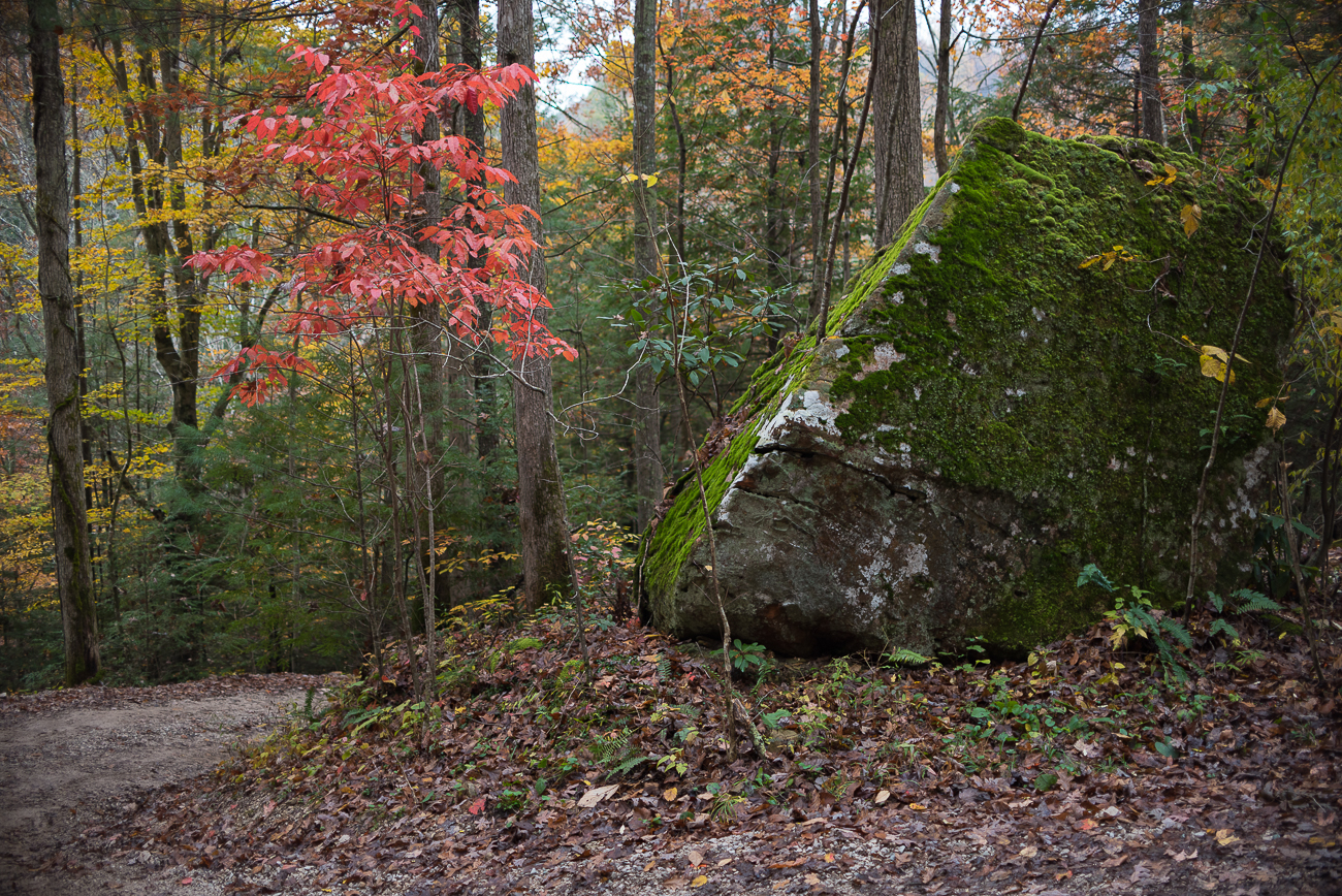 The cabin is named for the mossy rock at the base of the hill guests must climb to get to it. / Image: Phil Armstrong, Cincinnati Refined // Published: 11.14.17<p></p>