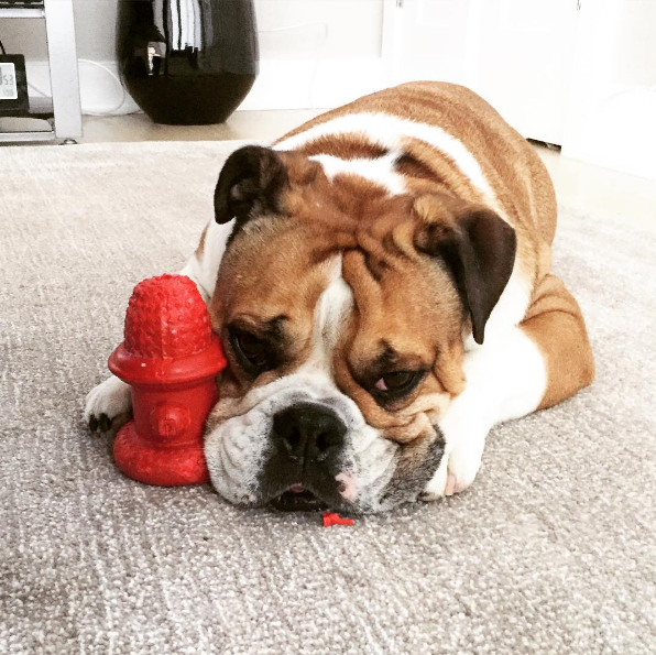 IMAGE: IG user @paddyinthecity / POST: My #momager says I'm not a real fireman cuz my hydrant isn't Paddy proof! #shemakesnosense #emopaddy #firebully #paddythefatty