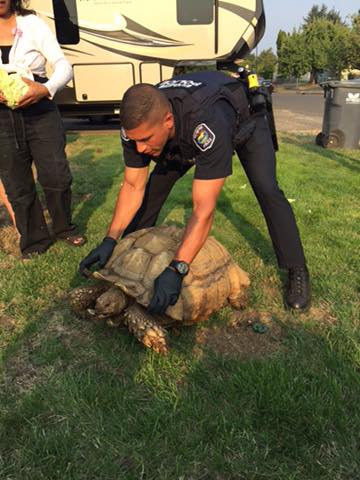 "Officers found the tortoise ""running"" loose at Hilton Drive and Elizabeth Street in the Bethel neighborhood. (EPD photo)"