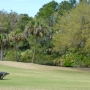 Gator interrupts Kiawah Island fundraiser golf tournament