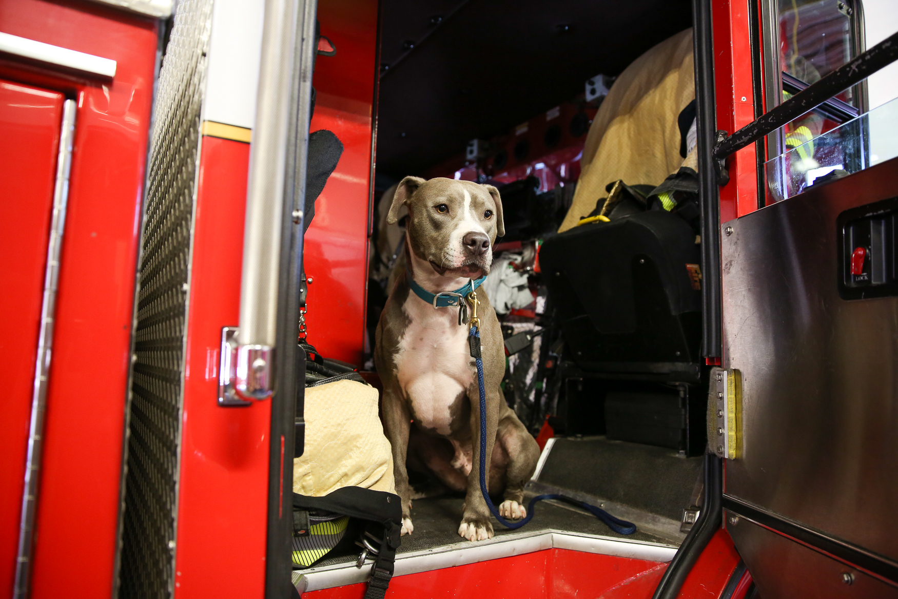 Earl Grey in a fire truck at Engine Company 11.{ }(Amanda Andrade-Rhoades/DC Refined)