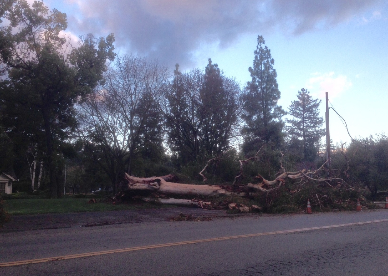 Large tree down on Van Ness between Sierra and Bullard in Fresno by Traci Obata 1-11-17