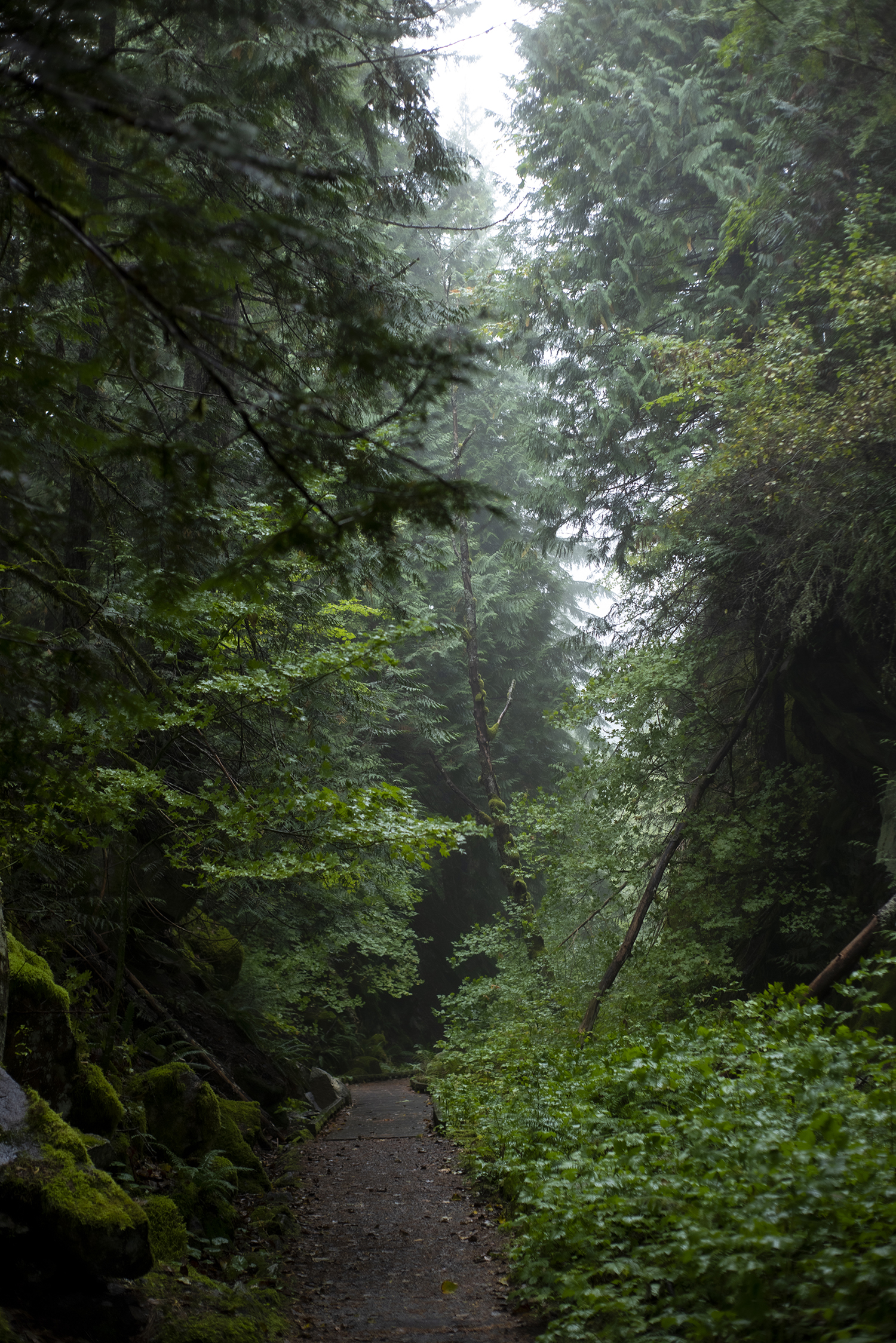 The new Cascade Tunnel was built and later opened in 1929, leaving the old remaining tunnels completely abandoned. Still in use today, the passageway is busy with trains rumbling through the mountain range filling the foggy air with an eerie reminder of what used to be.{ }(Image: Rachael Jones / Seattle Refined)