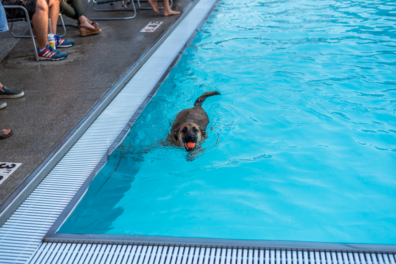 You 39 Ve Never Seen Anything Cuter Than This Doggie Swim Event At Ziegler Pool Cincinnati Refined