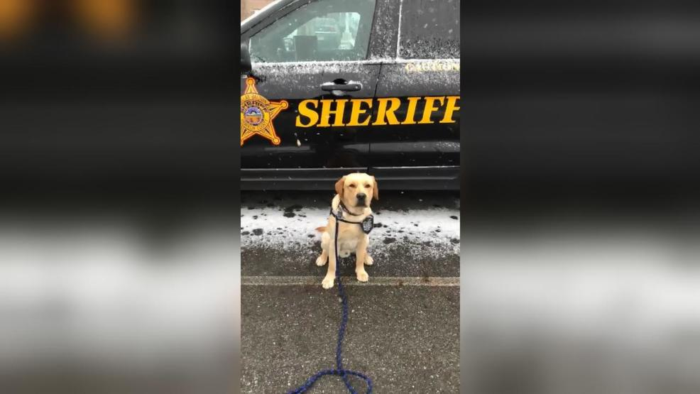 Say It Ainu0027t Snow: Sheriffu0027s Office Therapy Dog Gets First Taste Of Winter