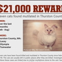 'It's terrible. It's shocking:' More cats found mutilated in Thurston County