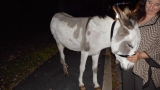 Lost donkey in Coventry reunited with owner