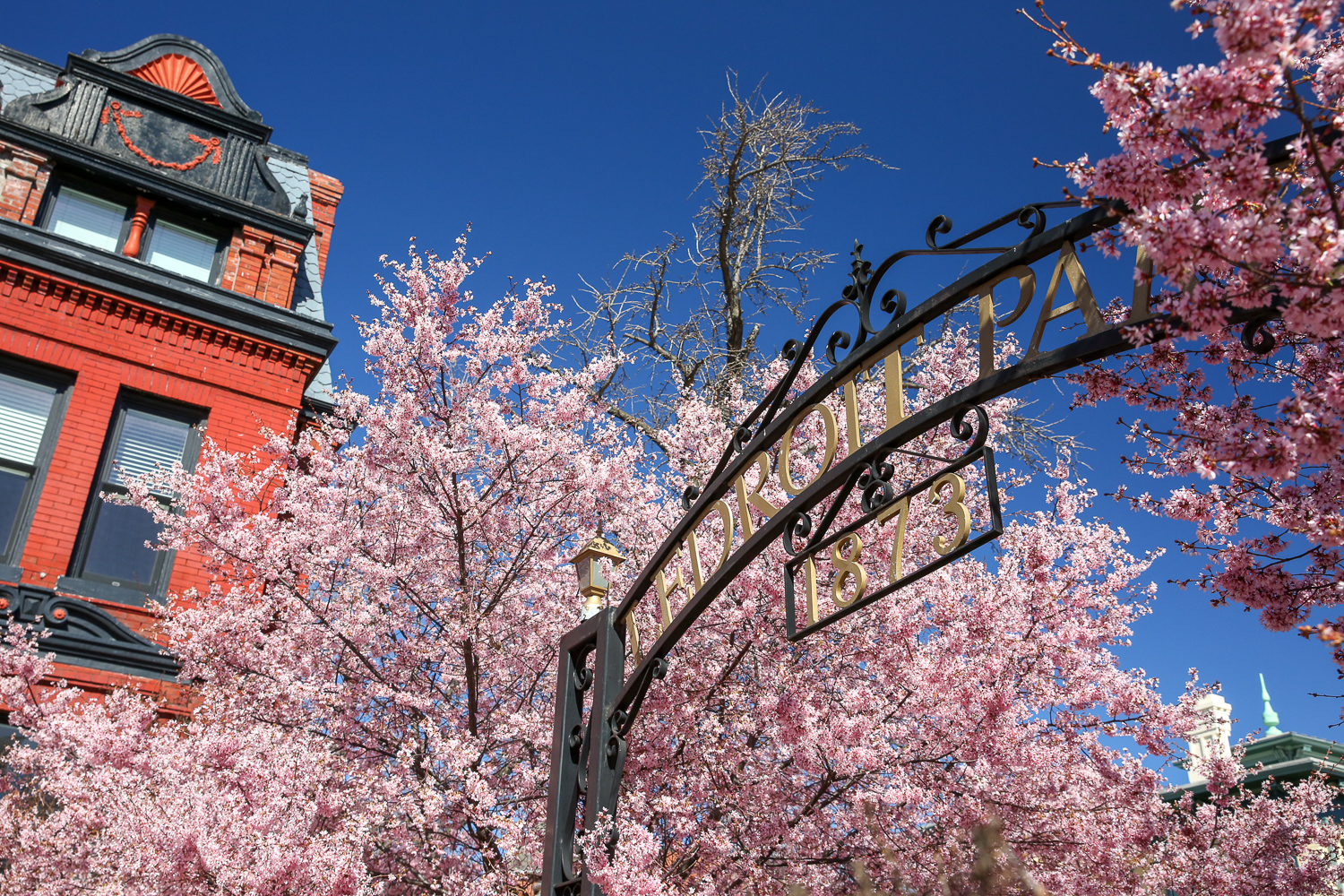 The gate to LeDroit Park on the corner of Florida Avenue NW and 6th Street NW is surrounded by blooming trees right now - ahead of the blooms around the Tidal Basin. The clustered trees are ultra-photogenic. (Amanda Andrade-Rhoades/DC Refined)