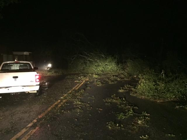 Hundreds of trees are reported to be down across Southwest Georgia. Crews started cleaning and working to restore power as soon as the storm passed east out of the area. / Mary Green