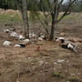 Lightning strike kills 31 sheep on farm