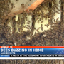 Experts warn of aggressive bees during dry season