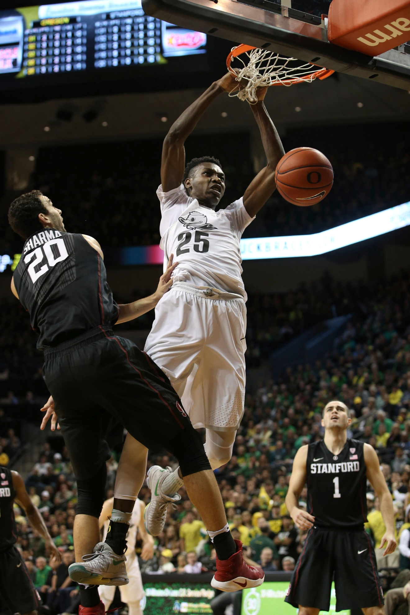 Oregon's Chris Boucher, center, dunks the ball between Stanford's Josh Sharma, left, and Christian Sanders, right, during the first half of an NCAA college basketball game, Saturday, Jan. 21, 2017, in Eugene, Ore. (AP Photo/Chris Pietsch)