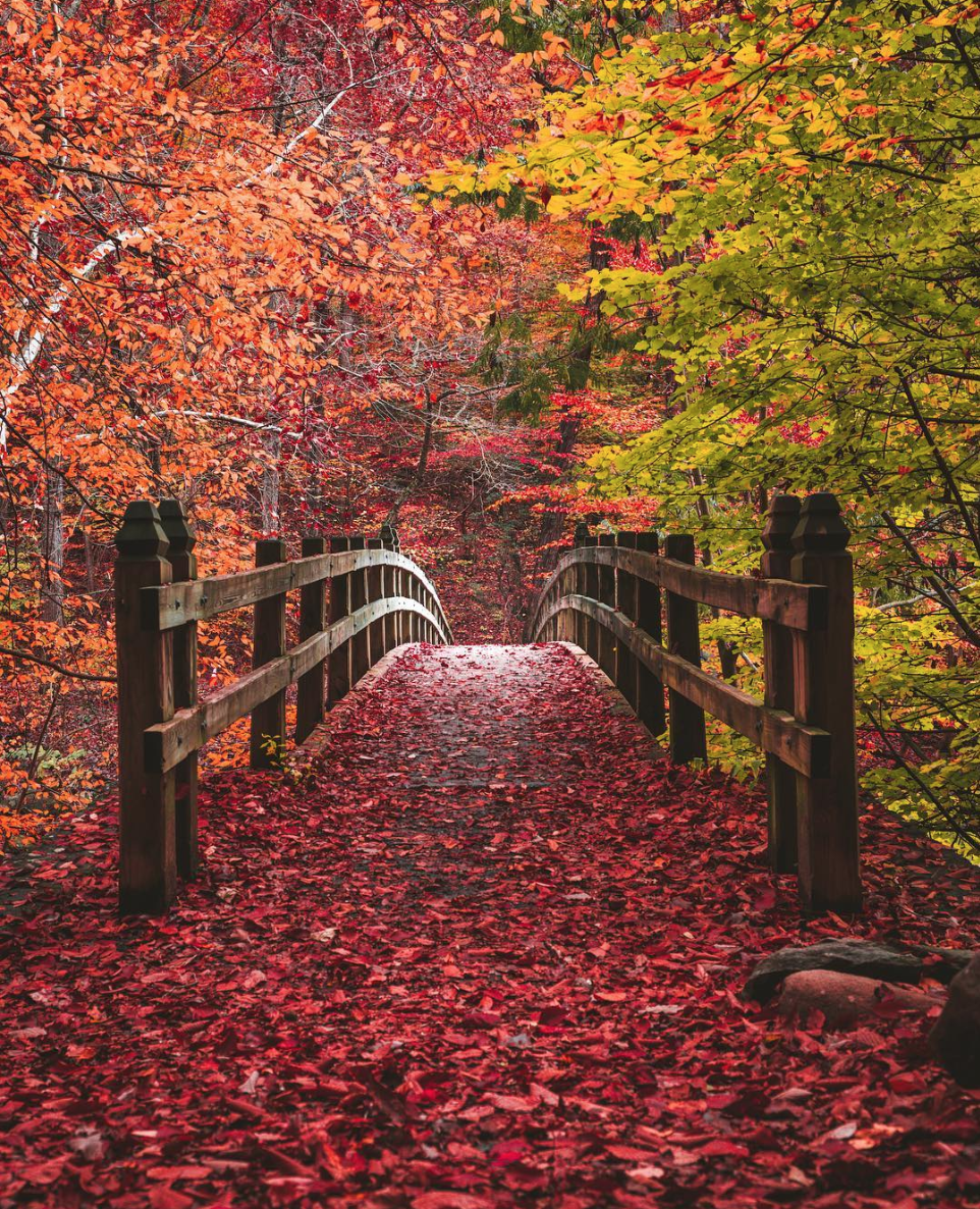 Rock Creek Park doesn't look like this yet, but we're looking forward to when the leaves change color. (Image via @dccitygirl)
