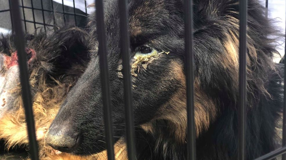 Humane Society caring for severely neglected, abused dog