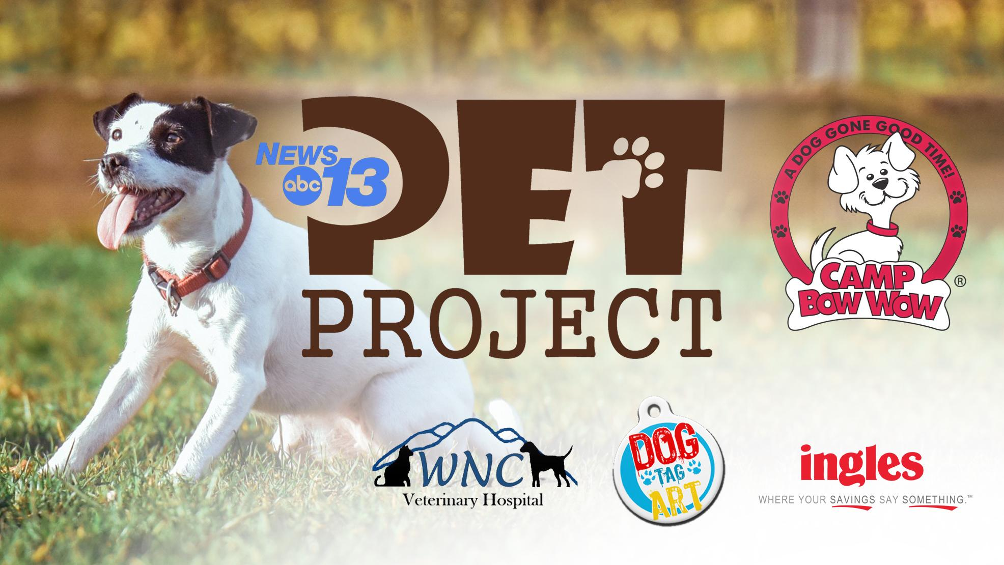 Happening Today: News 13 Pet Project