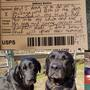 Dogs go viral after postal worker leaves note about them stealing her lunch