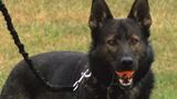 Lee County K9 set to receive protective vest thanks to donation
