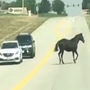 Caught on camera: Horse dodges traffic on Colorado highway