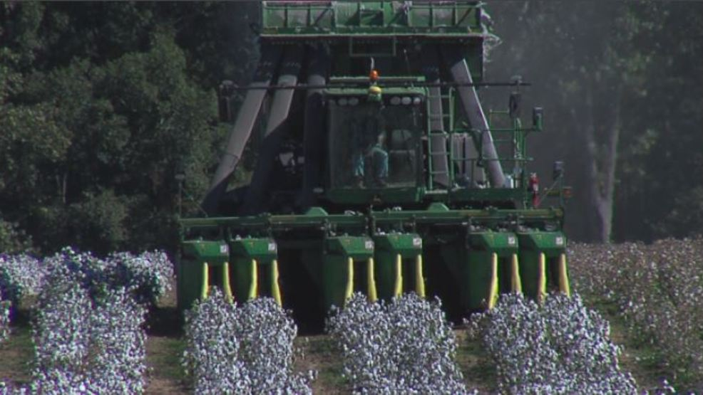 Centre cotton gin expected to boost production   WBMA