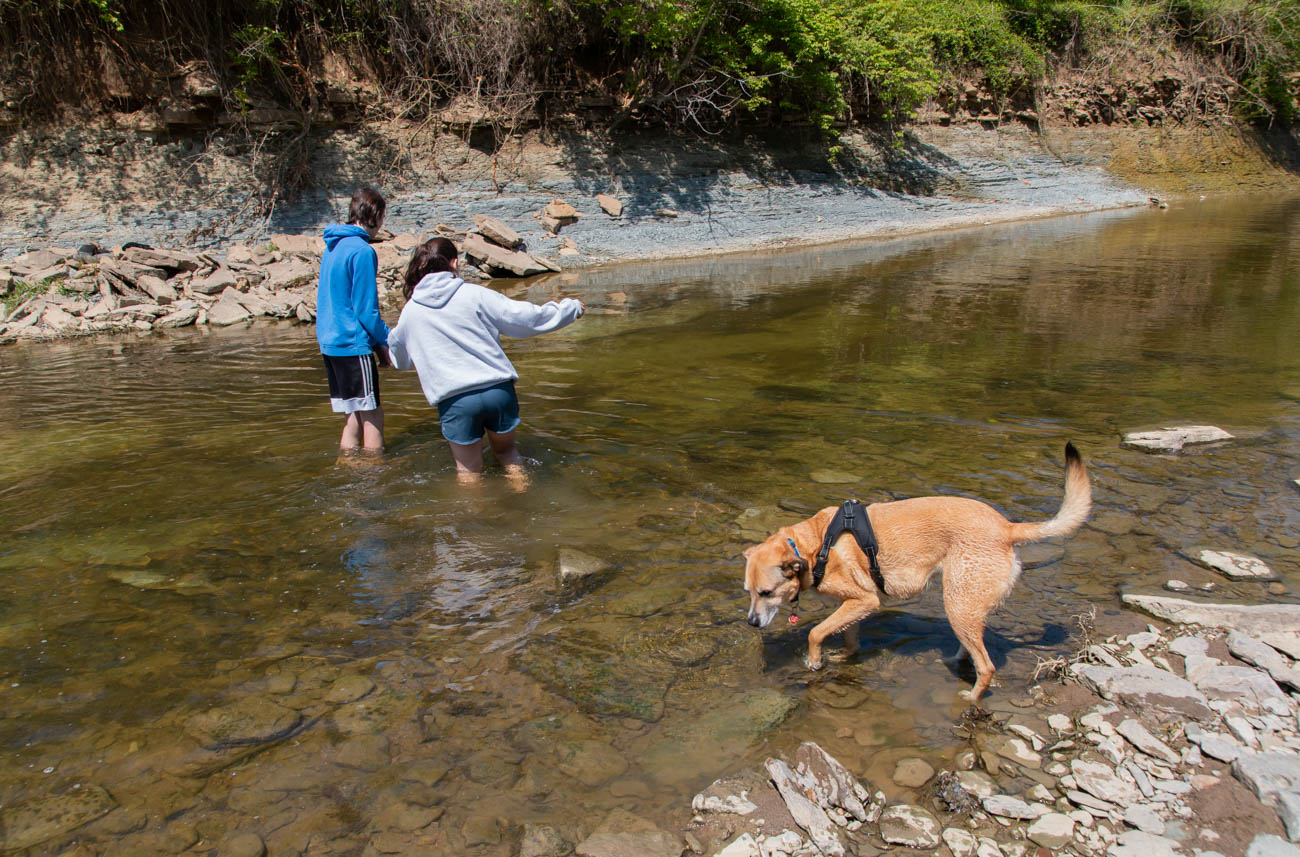 <p>While the walking trails are flat, they can be muddy after a good rain. Several paths lead down the banks into the creek, which is a great spot for skipping rocks, discovering fossils, and taking your kids and four-legged family members. / Image: Elizabeth A. Lowry // Published: 5.12.20</p>
