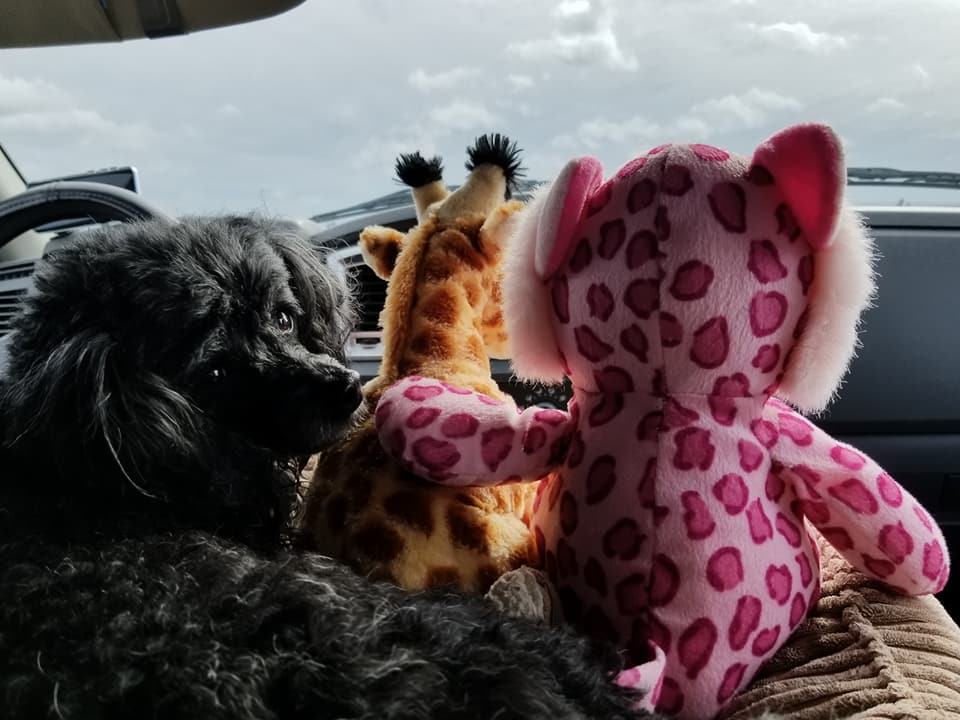 Clovis woman on a mission to reunite stuffed animals with their 'best friend.' Sharing the doggy bed on a road trip. (Brenda Bibb Kirby via KMPH)<p></p>