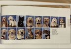 Parkland therapy dogs featured in yearbook.JPG