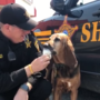 Delaware County K-9 Lacy enjoys ice cream at her retirement party