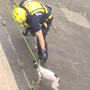 Video: Dog rescued from river wall in Johnstown