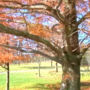 Scammers try to buy trees for thousands less than they're worth