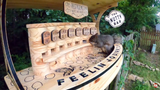 Man takes woodworking hobby to new level with a 'bar' for squirrels