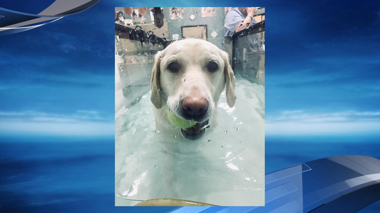 As part of her therapy, Opal took to the pool. (Photo: Barb Linder)