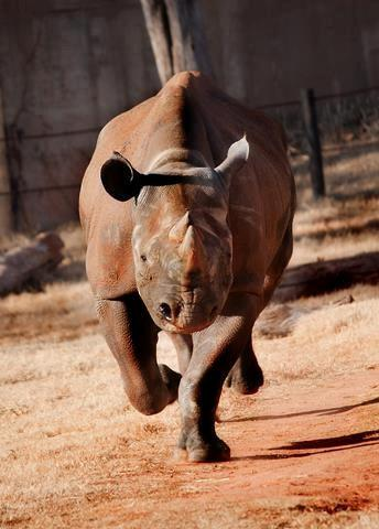 The Oklahoma City Zoo says Marsha, the 32-year-old black rhino, died during a medical exam on Sunday.