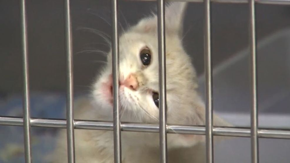 Marshall County Animal Shelter dealing with an influx of cats, kittens