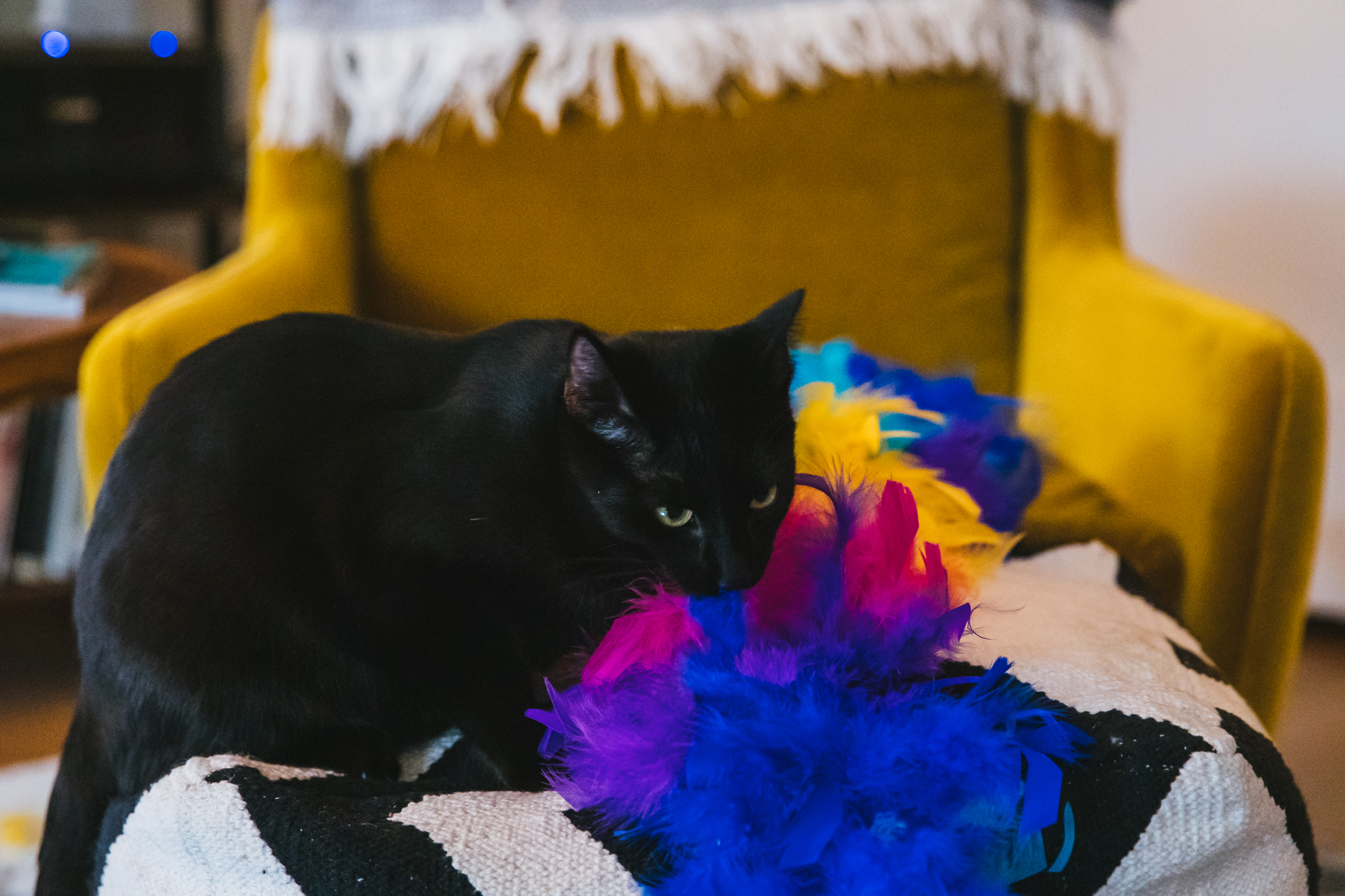 "A little panther of a kitten, Thor was adopted from{&nbsp;}<a  href=""https://www.motleyzooanimalrescue.org/"" target=""_blank"" title=""https://www.motleyzooanimalrescue.org/"">Motley Zoo Animal Rescue</a>{&nbsp;}on the eve of quarantine. Determined to break your heart, Thor and his brother Bruce love to wrestle and spoon and climb to the top of everything. His mom SWEARS he's part spider monkey, awaiting tests to confirm. On any given day, you'll find the 10-month-old napping on mom's desk, insisting on tummy rubs, or playing fetch with his favorite toys. He loves all things edible and hates rules. Do not look directly into his big golden eyes, as you will for sure melt.{&nbsp;}<a  href=""http://seattlerefined.com/ruffined"" target=""_blank"" title=""http://seattlerefined.com/ruffined"">The RUFFined Spotlight{&nbsp;}</a>is a weekly profile of local pets living and loving life in the PNW. If you or someone you know has a pet you'd like featured, email us at{&nbsp;}<a  href=""mailto:hello@seattlerefined.com"" target=""_blank"" title=""mailto:hello@seattlerefined.com"">hello@seattlerefined.com</a>, and your furbaby could be the next spotlighted! (Image: Sunita Martini / Seattle Refined)"