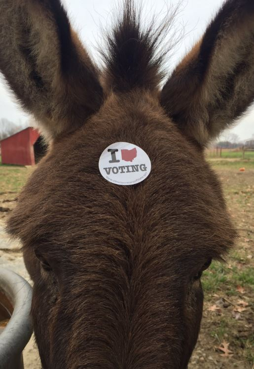 Mr. Donker Donks showing off his voter sticker