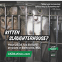 Watchdog group sues Md. after state says no to anti-kitten lab ads on buses, trains