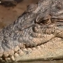 Teen jumps into crocodile-infested water on a dare... and it went as you would expect