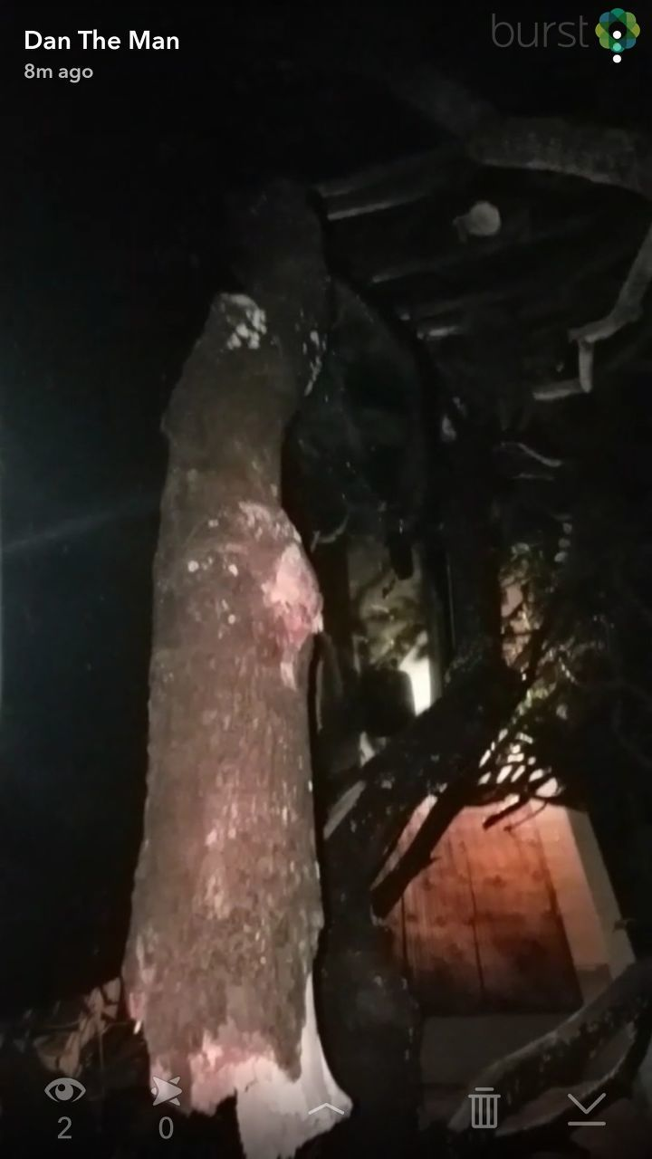 Tree damage in Boca Raton./ Photo Credit: CBS 12